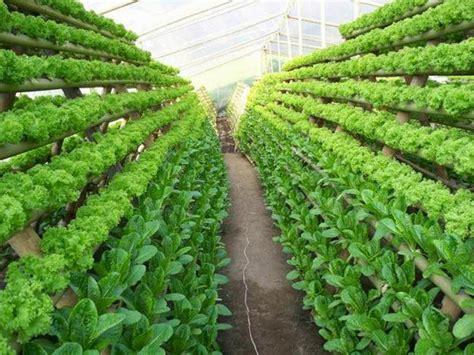 Jual Pupuk Hidroponik Surabaya jual nutrisi hidroponik sayur cabe melon dan buah