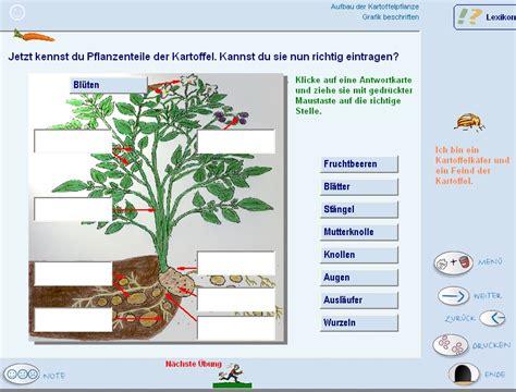 Beschriftung Kartoffelpflanze by Lernsoftware Sachkunde Lernprogramm Grundschulen