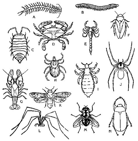 insect coloring book print out insects their relatives pictures