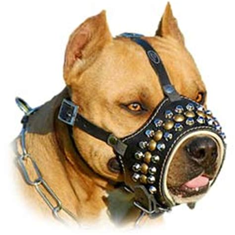 how to k9 dogs muzzles leather muzzles muzzles agitation muzzle canine muzzles