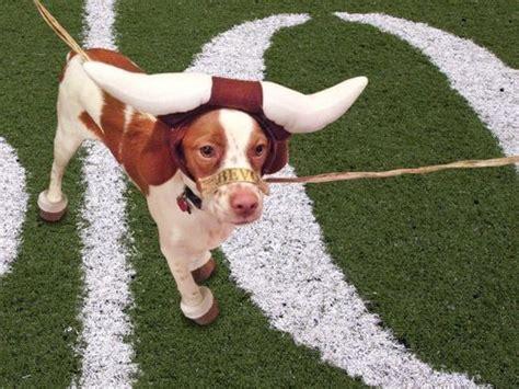 hook em horns texas longhorns pinterest via mitchell weinstein co op tumblr longhorn pets