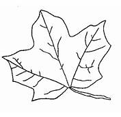 Fall Leaf Coloring Pages  School Projects Car Trip Activity