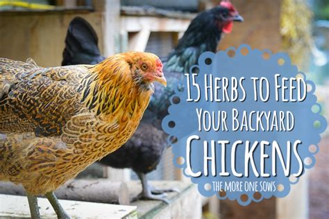 Virtuously Surrendered 15 Herbs To Feed Your Backyard What To Feed Backyard Chickens