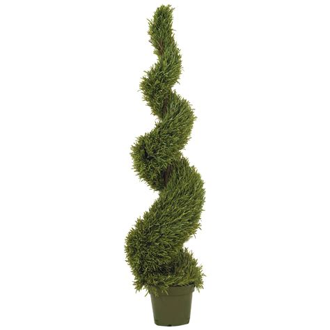 5 foot rosemary spiral topiary potted 5171
