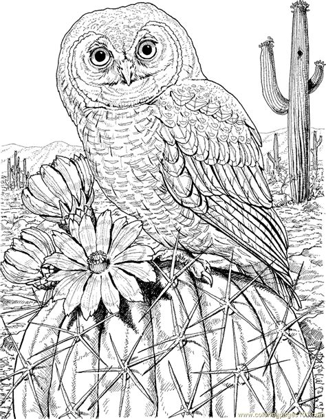 spotted owl coloring page mexican spotted owl on cactus printable coloring page for