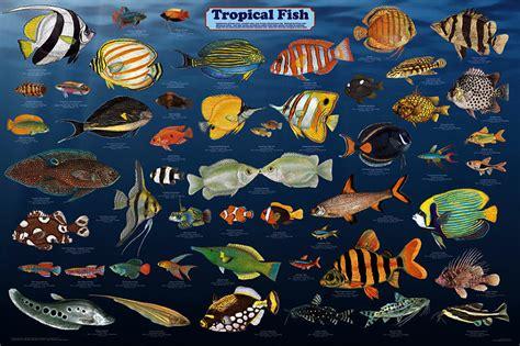 types of aquarium fish tropical fish poster by feenixx publishing