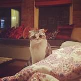 Taylor Swift Meredith Tumblr | 640 x 640 jpeg 48kB