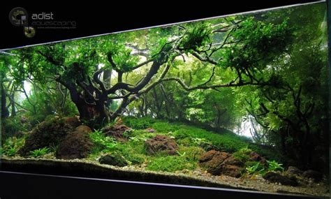aquascape lights charm of light aquascape pinterest creative charms