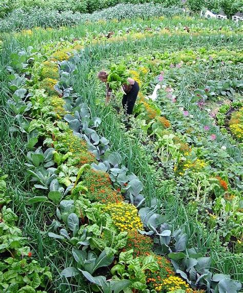 This Is A Picture Of The Eden Project In Cornwall England Permaculture Vegetable Garden Layout