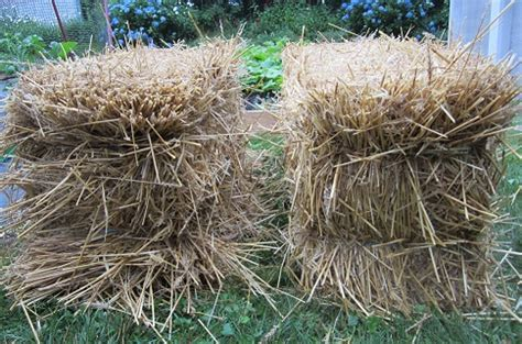 how to make a straw bale garden the home depot community