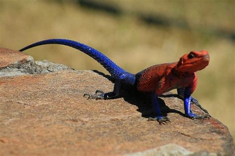 animals that change color most strangely colored animals on earth animal deities