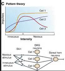 pattern theory of pain pattern theory pain modulation