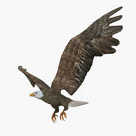 Kaos 3d Eagle Fly unmanned neuron rigged 3d model
