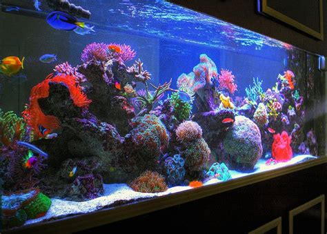 salt water aquarium hdr sherry s 285 gallon saltwater aquarium right side angle flickr