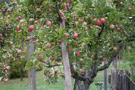name a fruit that grows on a tree - Name A Fruit That Grows On Trees