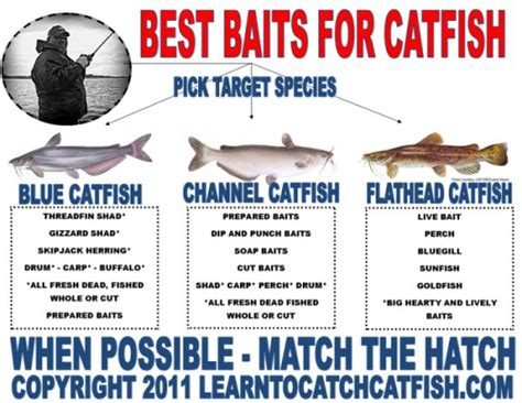 catfish bait best bait for catfish search engine at search