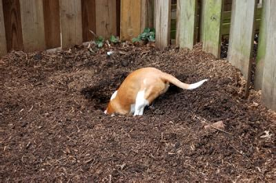 why do dogs dig holes in the backyard how do dogs behave outside vs inside
