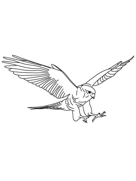 coloring page falcon bird falcons coloring pages download and print falcons