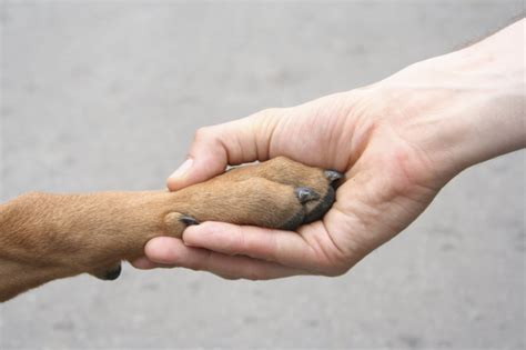 shake a paw puppy mill reports on puppy mills puppy cruelty closed caign globalgiving
