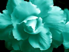 teal colored flowers teal green begonia floral photograph by jennie schell