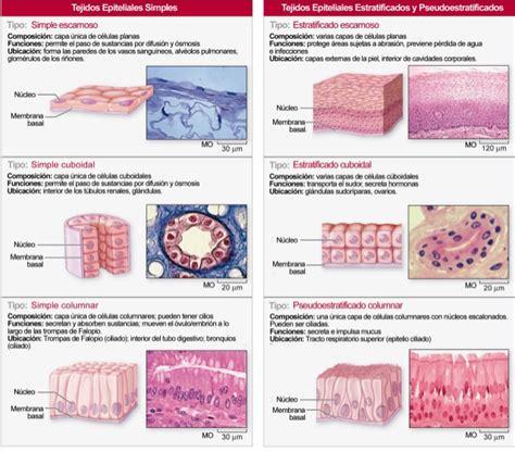 imagenes tejidos animales tejidos animales