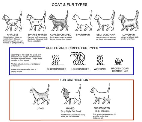 Types Of Haired Cats by Conformation Charts