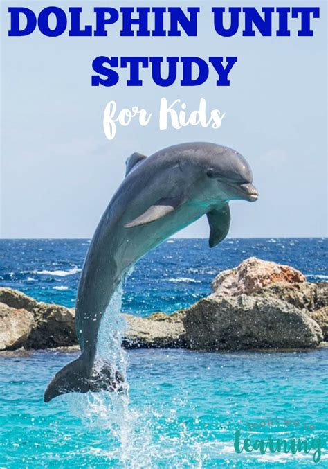dolphins a kid s book of cool images and amazing facts about dolphins nature books for children series volume 5 books dolphin facts for look we re learning