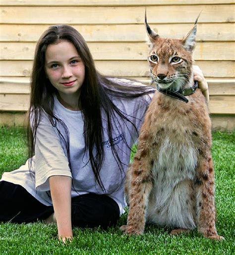 Lynx House Cat by Healthiana Lynx Cat