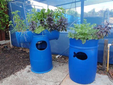 backyard aquaponics forum barrel aquaponic systems backyard aquaponics