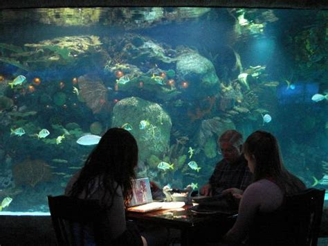 friendly restaurants houston aquarium restaurant houston downtown menu prices restaurant reviews tripadvisor