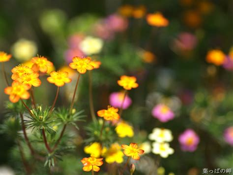 flower photography flowering plants hd flower photography beautiful flowers