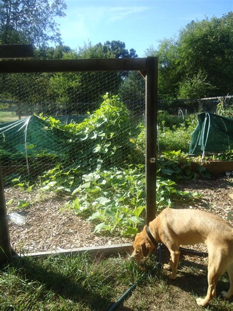 how to keep deer out of vegetable garden motion activated