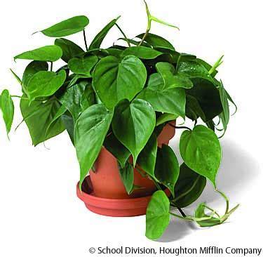 most common house plants pictures house plants
