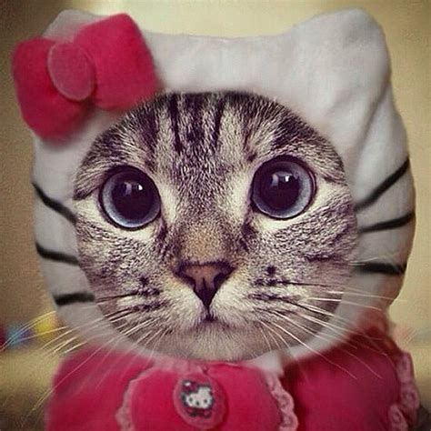 Funny Cat Costumes   POPSUGAR Tech