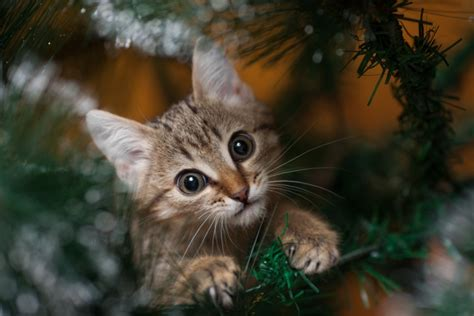 10 ways to help homeless animals this holiday season catster
