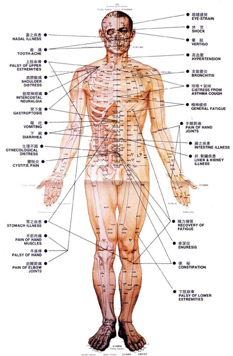 acupressure diagram of pressure points acupuncture points china herbal medication