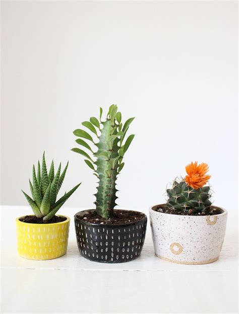 cactus planters 17 best ideas about cacti and succulents on pinterest