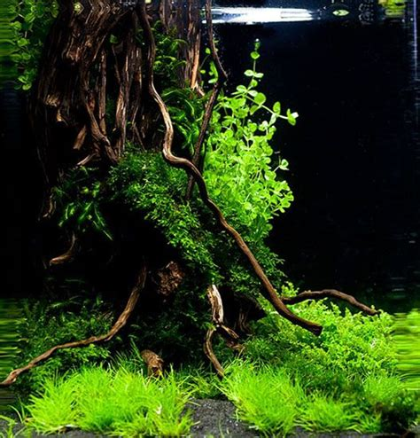 Nano Aquascaping by Nano Aquascaping Suche Flesh Water Aquarium