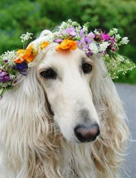 puppies and flowers flower upon a crown she wore flower hippies and