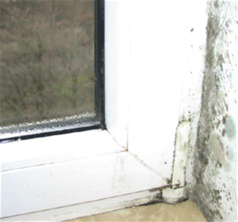 Schimmel Am Fenster Entfernen 5099 by Schimmelpilze Mehr F 252 R Den Menschen Als F 252 R Das Holz