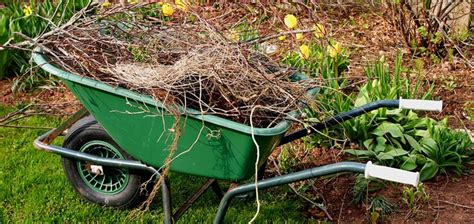 backyard clean up spring yard clean up tips hirerush blog