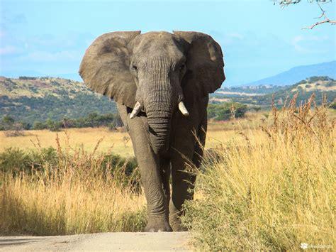 botanical name of elephant classification schemes biodiversity and classification siyavula