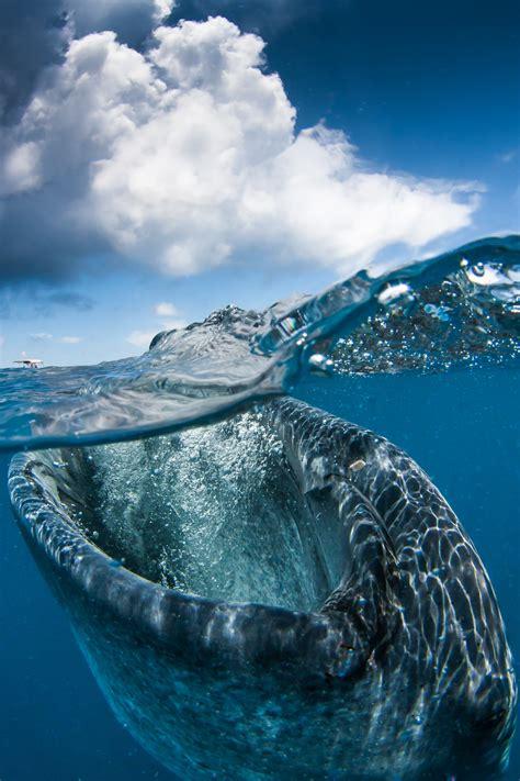 imagenes increibles bajo el mar hermosas fotos de diferentes pa 237 ses debajo y sobre el agua
