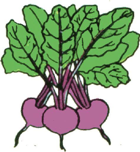beet clipart arthur s free color vegetable clip page 1