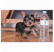Free Puppies For Adoption  Autos Post