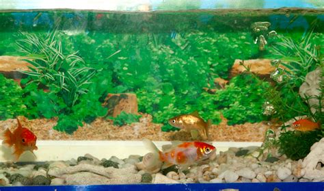 how to creatively decorate a freshwater fish tank 6 steps