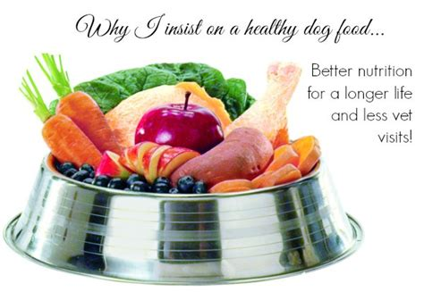 healthy food for dogs my dogs why healthy food is important to me baby to boomer lifestyle