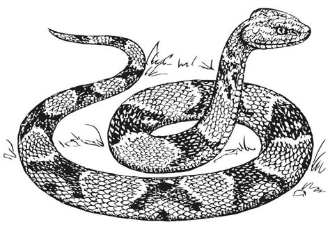 copperhead snake coloring page coloring page copperhead snake img 15740