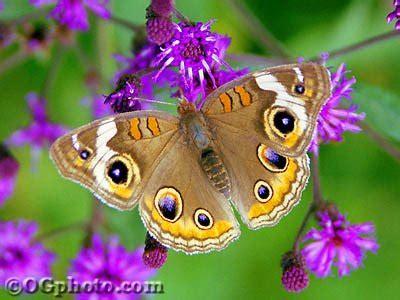 imagenes de mariposas espirituales tres maravillosas par 225 bolas para integrar octubre 2009 d c