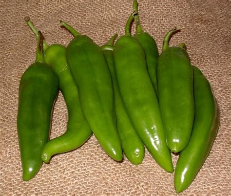 roasting and preparing green chiles by larry andersen